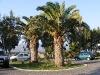 athina-elotti-palma